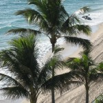 Post Card From a Palm Beachy Holiday