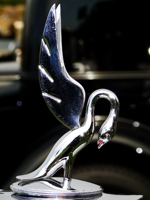 Packard Swan hood ornament