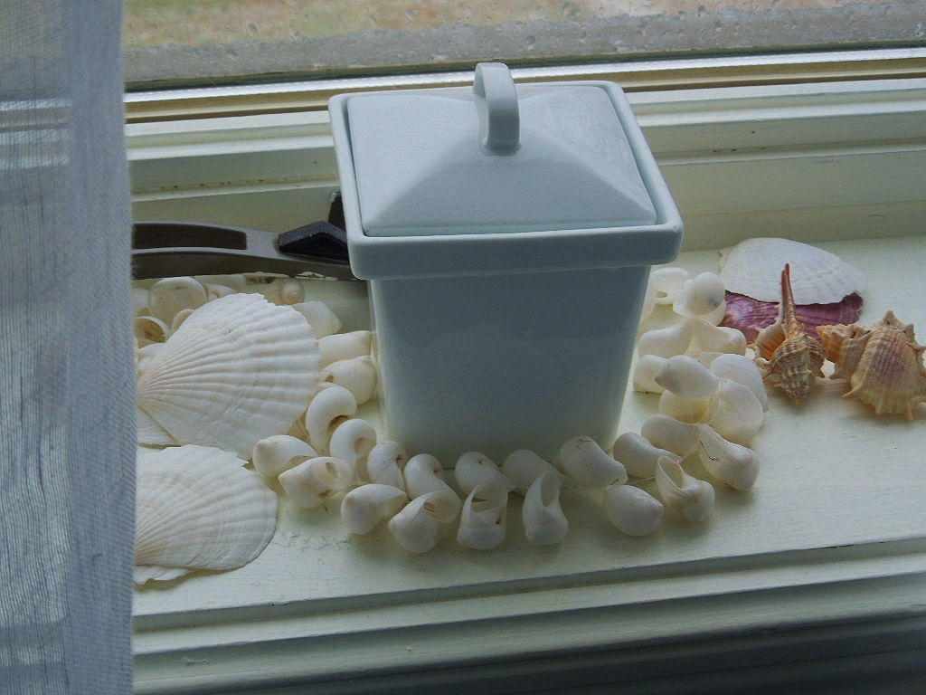 Seashell window display