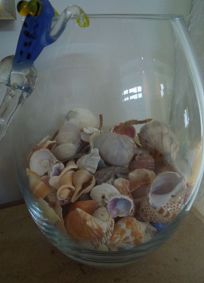 Shells collected during Naples project