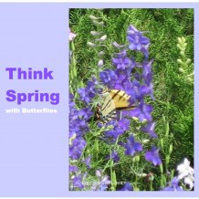 Think Spring with Butterflies