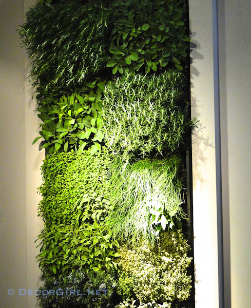 Green herb wall