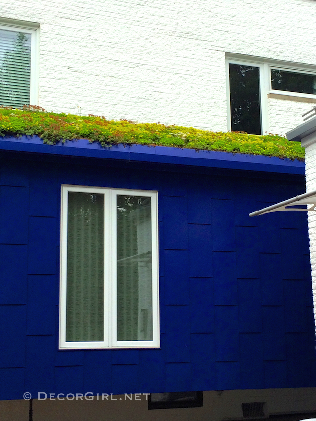 Live roof or green roof