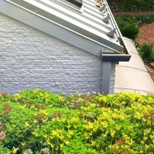 Live sedum on roof