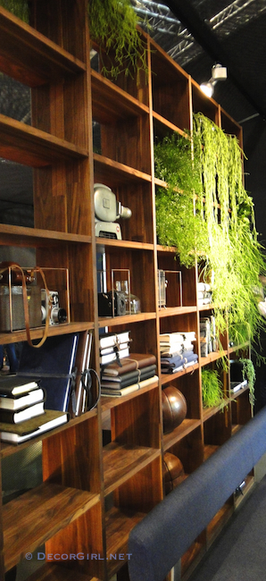 Plants in a book case