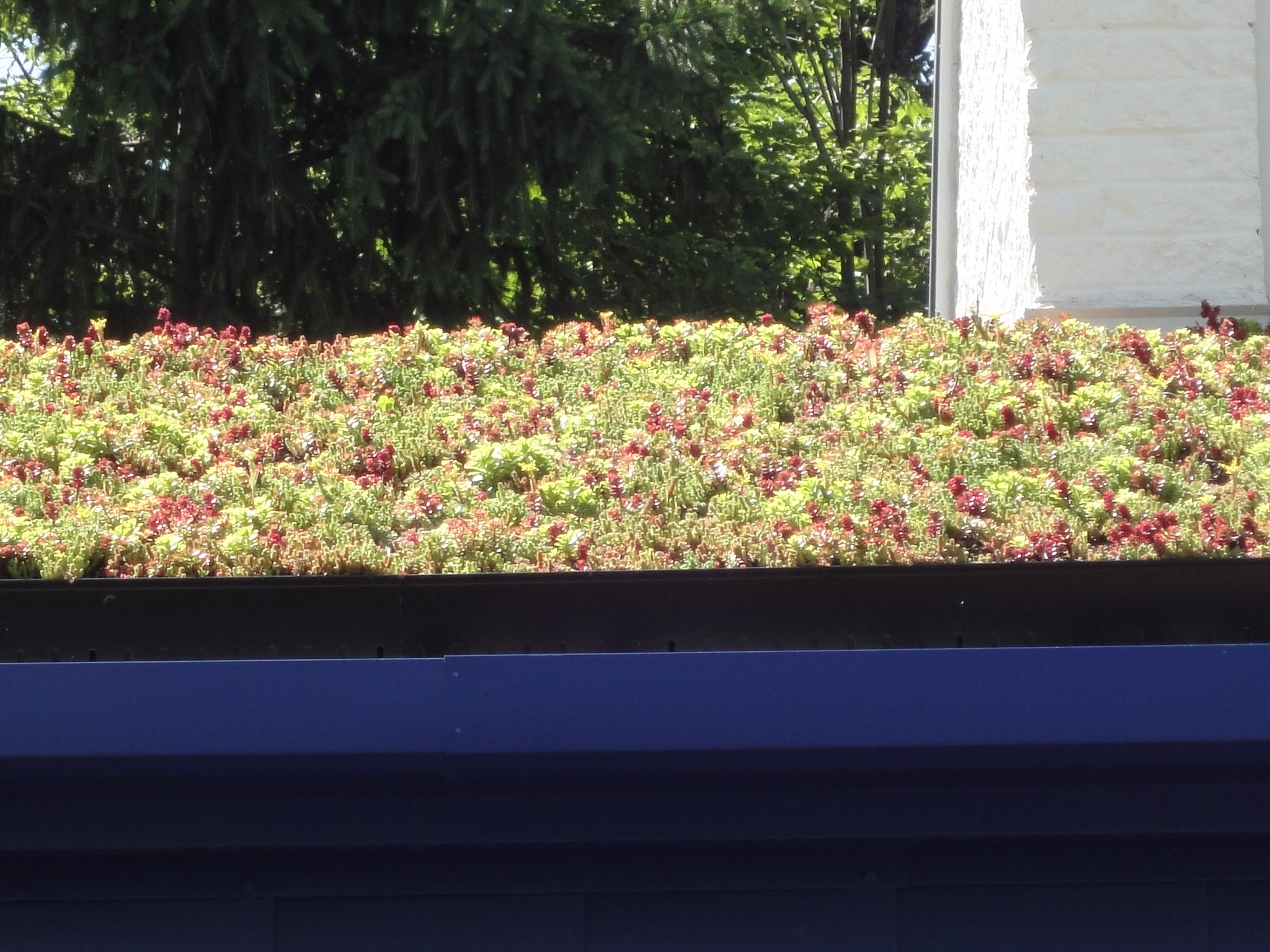 Green roof on contemporary home